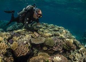 Great Barrier Reef Legacy Coral Biobank Charlie Veron