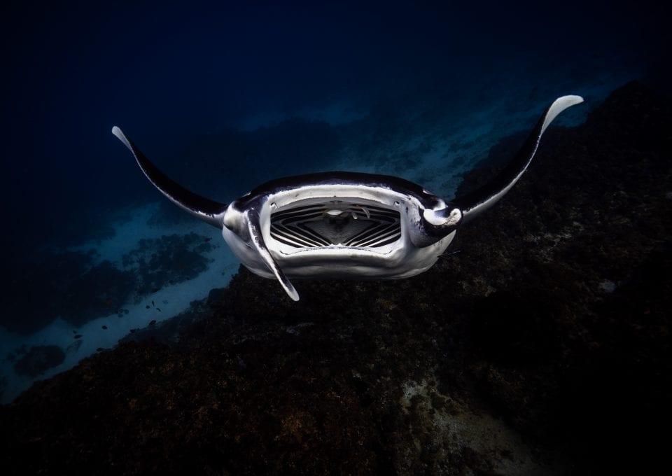 Julian Rocks, manta ray, Jono Allen