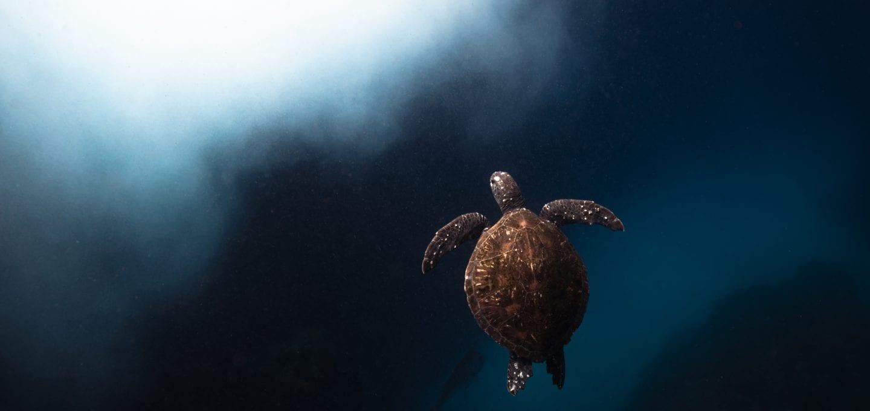 Julian Rocks, turtle, Jono Allen