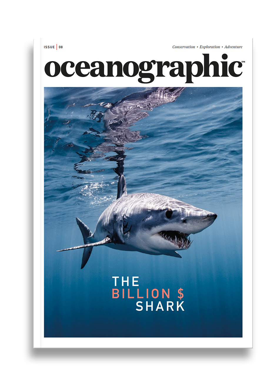 Oceanographic Magazine, Issue 08, Billion dollar shark