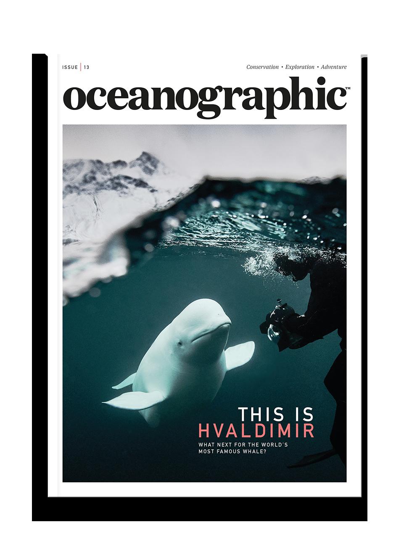 Oceanographic Magazine, Issue 13, This is Hvaldimir