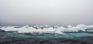 Angel Grimaldi Polar Guide Antarctica Arctic penguins