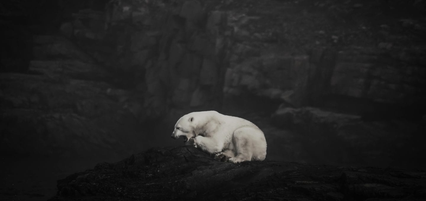 Angel Grimaldi Antarctica Arctic Polar Guide bear