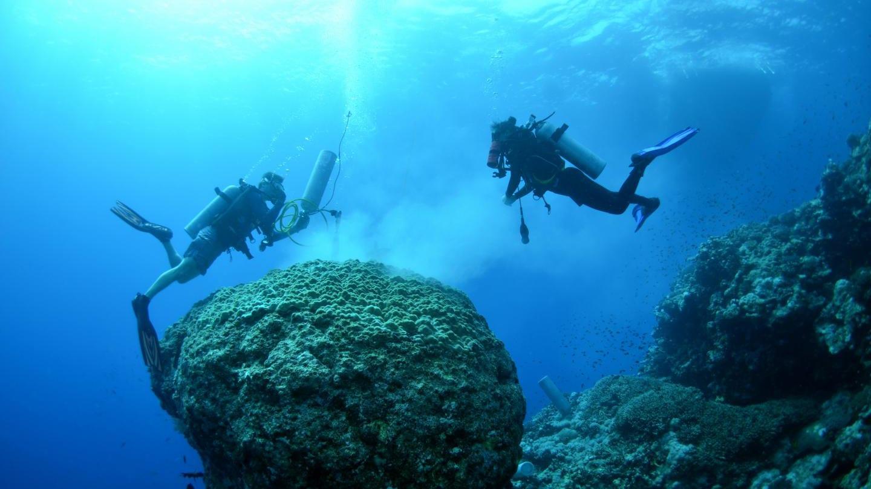 nutrients ocean coral bleaching