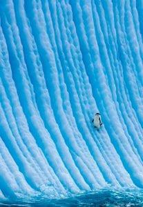 Paul Nicklen Sealegacy penguin Antarctica