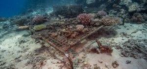 The Great Sea Reef Fiji WWF coral nursery