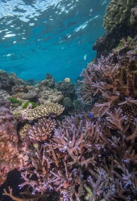 The Great Sea Reef Fiji WWF coral reef