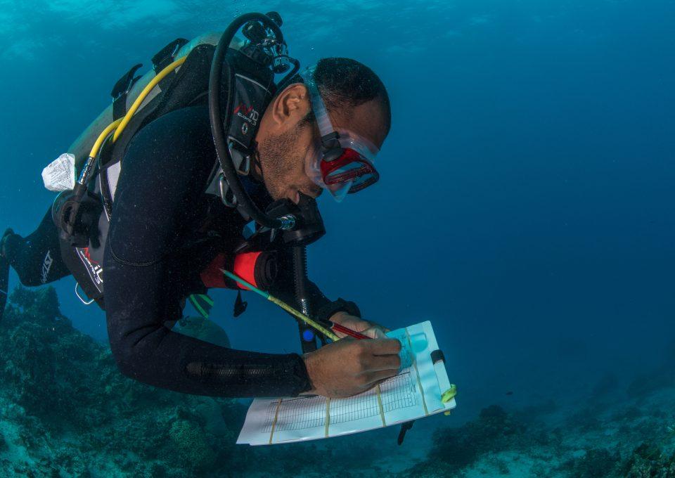 The Great Sea Reef Fiji WWF coral study