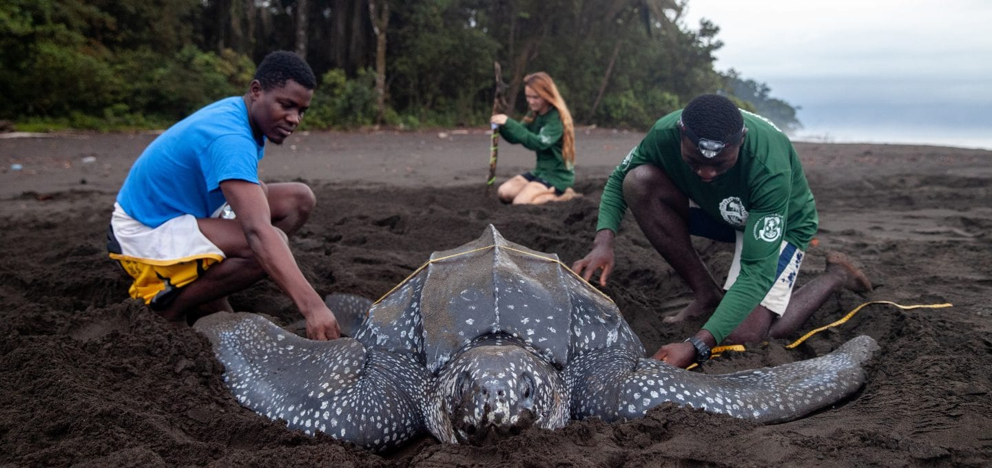 Leatherback turtle project conservation