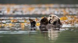 Vancouver sea otters James Thompson