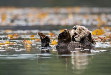 Vancouver sea otters James Thompson