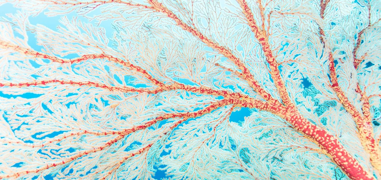 macro coral triangle chris leidy underwater photographer