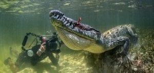 American Crocodiles Banco Cinchorro Mexico wildlife photographer
