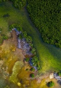 American Crocodiles Banco Cinchorro Mexico drone