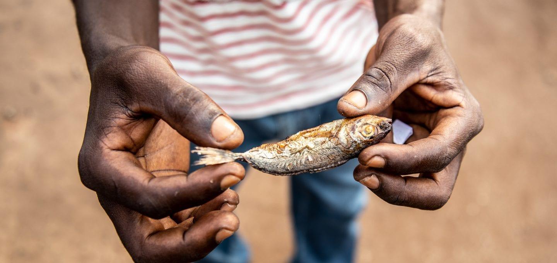 Saiko Ghana Environmental Justice Foundation fish juvenile