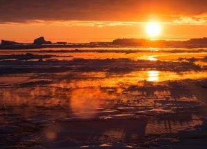 crabeater seals antarctica research vessel