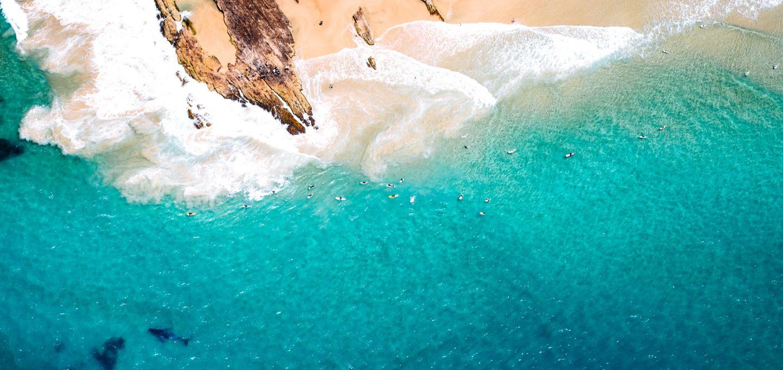 shark net shark culling Australia whale drone