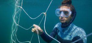shark net shark culling Australia entaglement