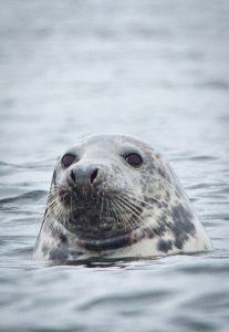 Greenpeace Dogger Bank MPA illegal trawling seal