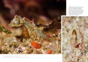 Pygmy seahorses, Issue 15, Oceanographic Magazine