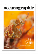 Oceanographic Magazine, Issue 15, cover, pygmy seahorses