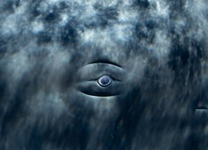 Physty sperm whale Dominica Gaelin Rosenwaks eye