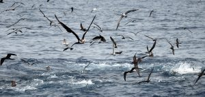 seabirds Global Fishing Watch Marine Protected Areas
