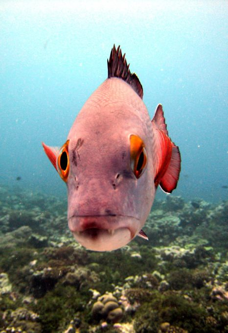 Snapper fish Global Fishing Watch Marine Protected Areas