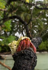 hermit crab Global Fishing Watch Marine Protected Areas