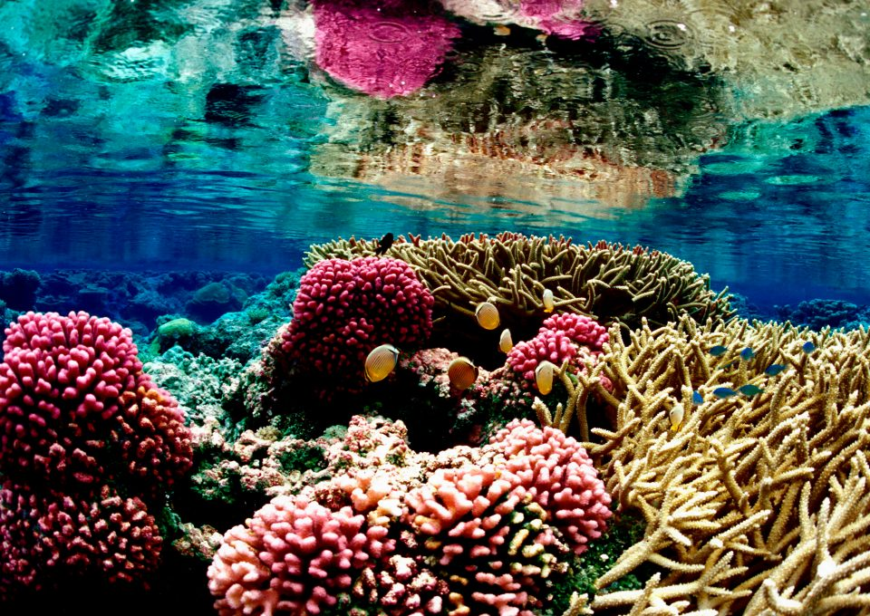 Coral reef Palmyra Global Fishing Watch Marine Protected Areas