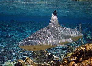 USFWS Global Fishing Watch Marine Protected Areas