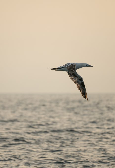 Lou Luddington sailing seagull