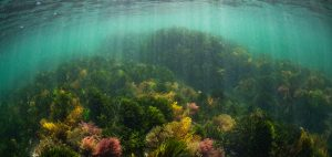 Lou Luddington sailing underwater photographer