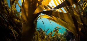 Lou Luddington sailing seaweed