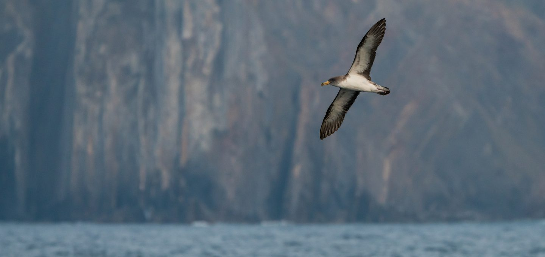 Lou Luddington sailing seabirds