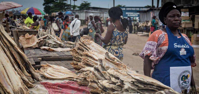 Shark fishing Republic of Congo TRAFFIC market