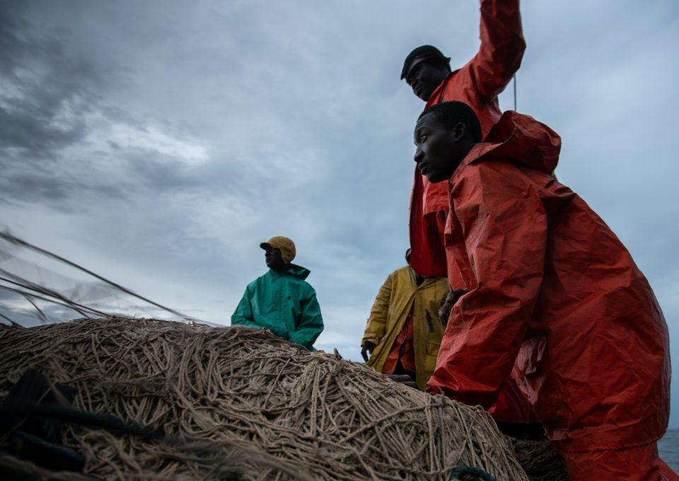 Shark fishing Republic of Congo TRAFFIC fishing