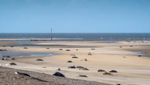 grey seal colony Blakeney Point