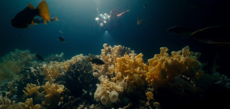 glass sponge reef howe sound british columbia sponges