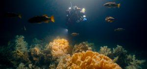 glass sponge reef howe sound british columbia deep water