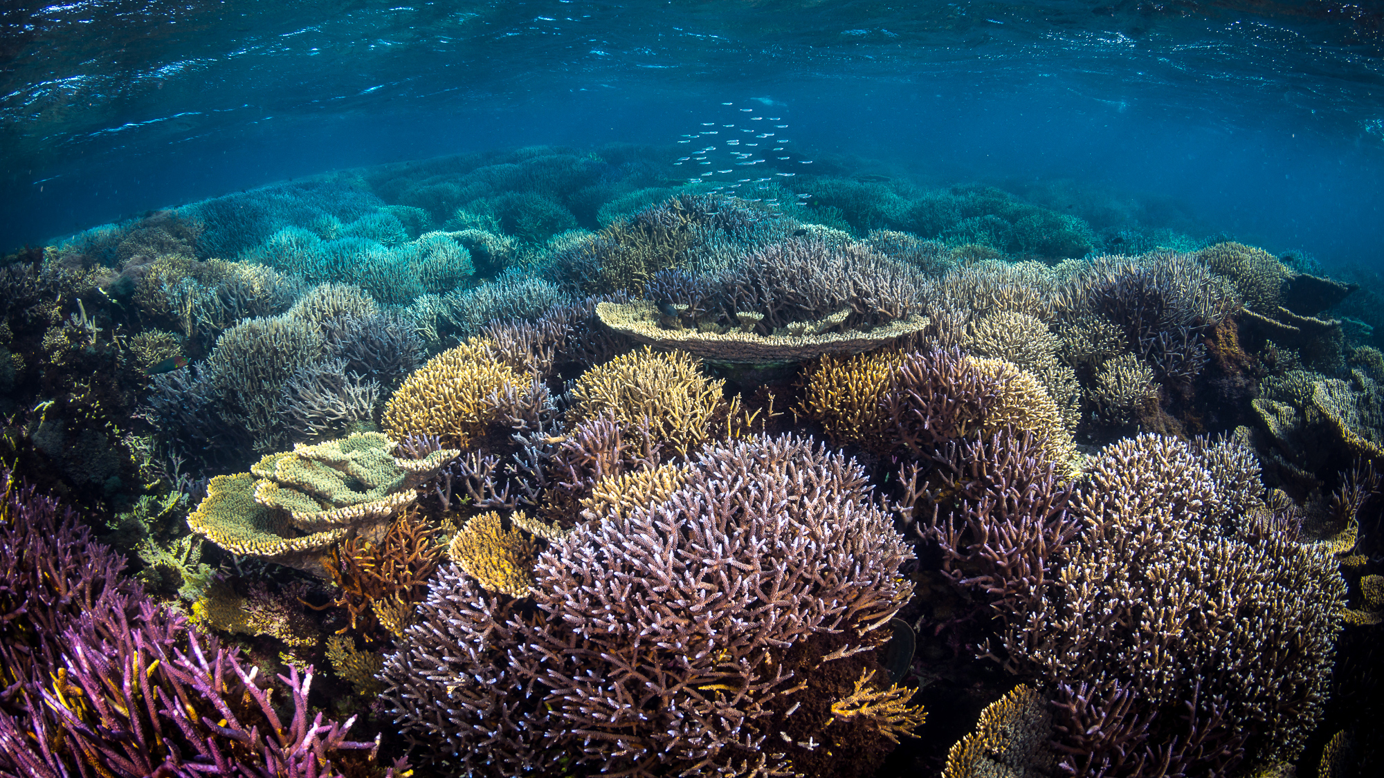 IUCN natural world heritage sites climate change great barrier reef