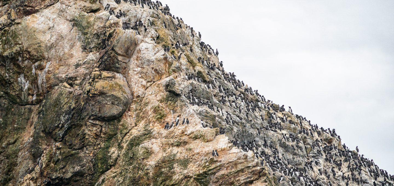 Triangle Island Ryan Tidman cliffs