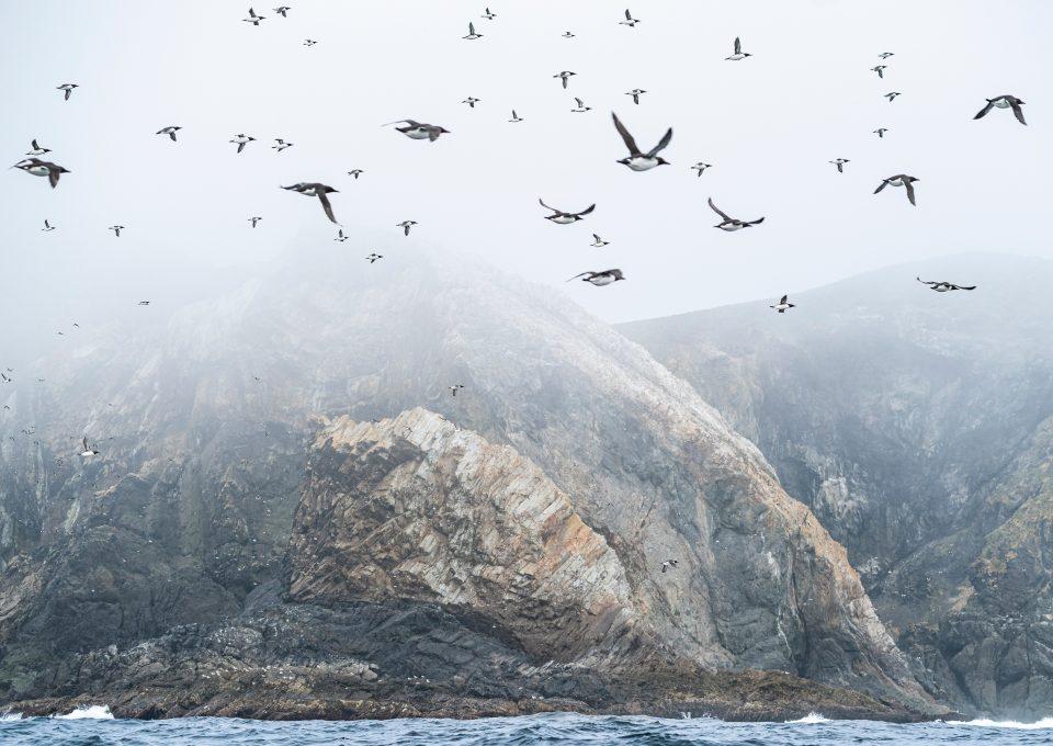 Triangle Island Ryan Tidman seabirds