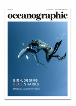 Issue 16, Oceanographic Magazine, blue sharks, Azores