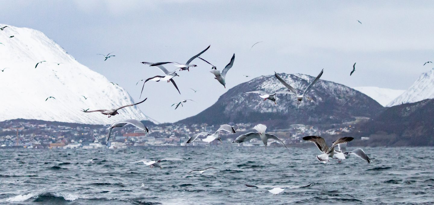 whale watching Norway covid 2020 seabirds