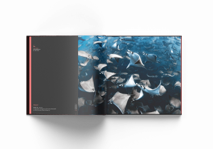 Ocean Photographer of the Year, Nadia Aly, Mobula rays, Mexico
