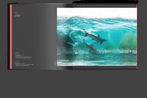 Surfing sharks, Australia, Sean Scott