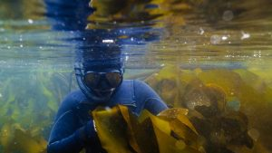 kelp forest salish sea freediving