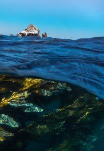 kelp forest salish sea british columbia