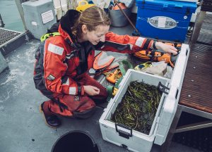 UK seagrasses Ocean Conservation Trust